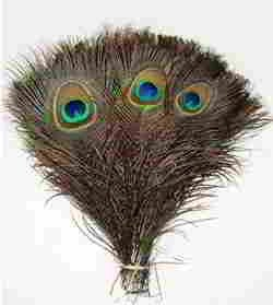 50 Pcs Peacock Feathers 10 - 12 Inches