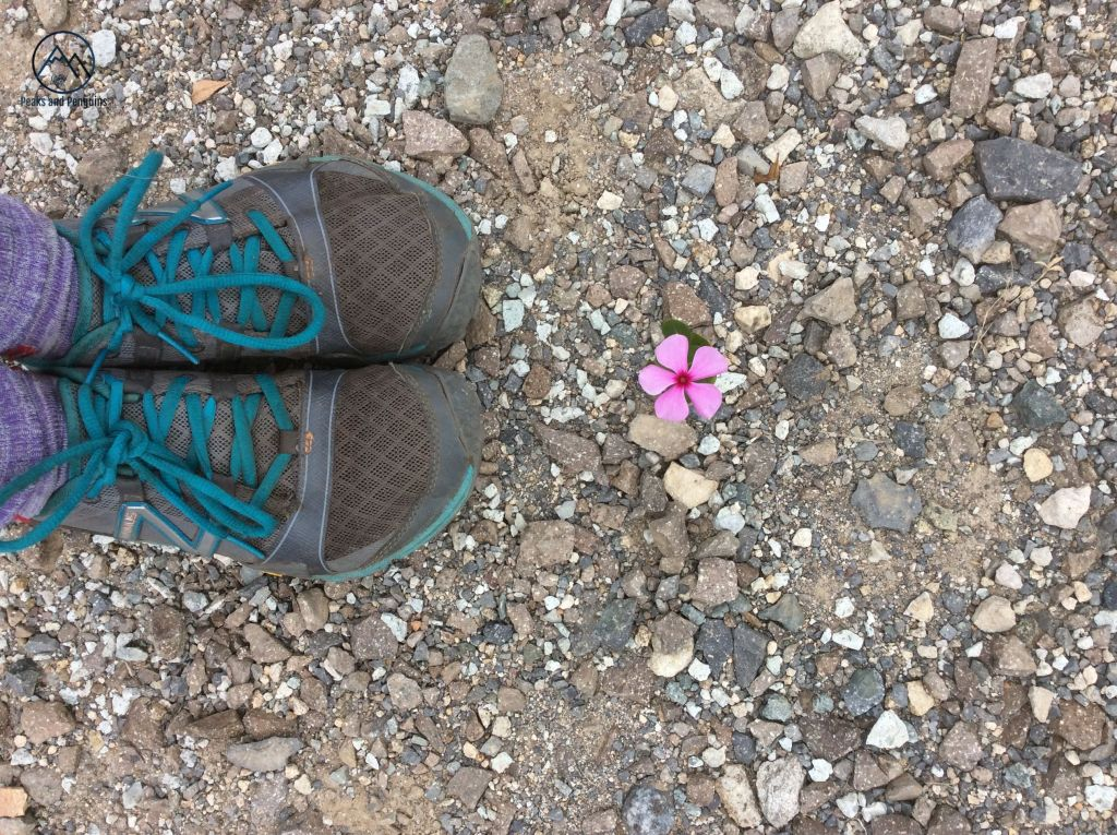 An image of a small, pink flower with five petals. It is growing out of the gravel of the temple grounds. The author's green and grey shoes enter the frame from the left.