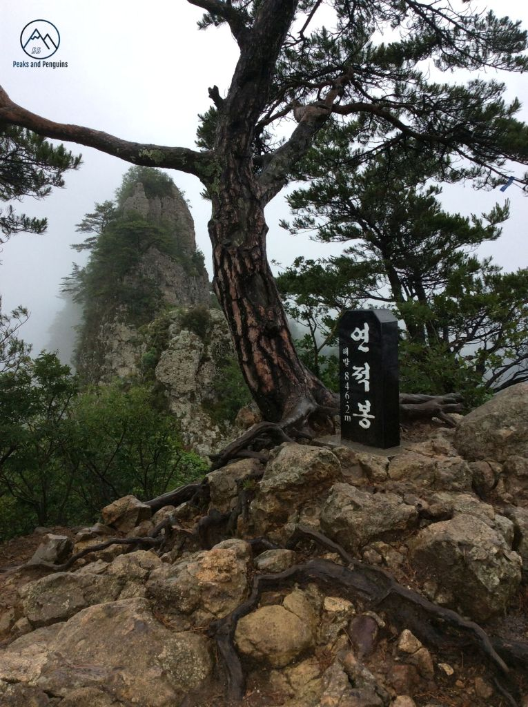 A beautiful image reminiscent of a classical East Asian painting. The gnarled roots of a pine tree break through rocks that are a slightly lighter shade of brown. The tree itself springs up from the rocks at an odd angle, and it is accompanied by a small black summit stele. Beyond this peak, another rises, steep and jagged, from the misty forest below.