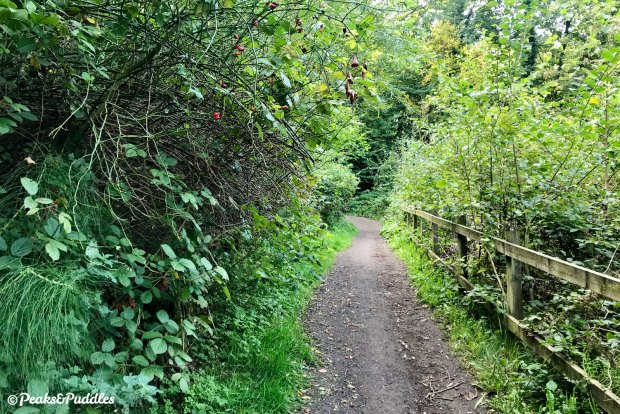 Alan Newton Way climb to Marple Hall as seen in September 2020, with rutted gravel surface and completely overgrown.