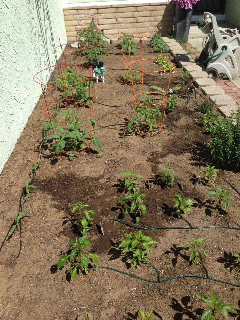 Vegetable Garden April 2015