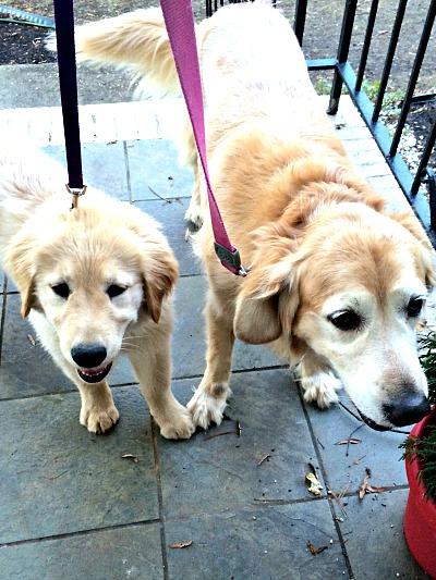 Pups Walking