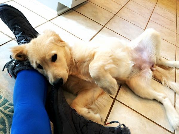 zoey cuddle 2