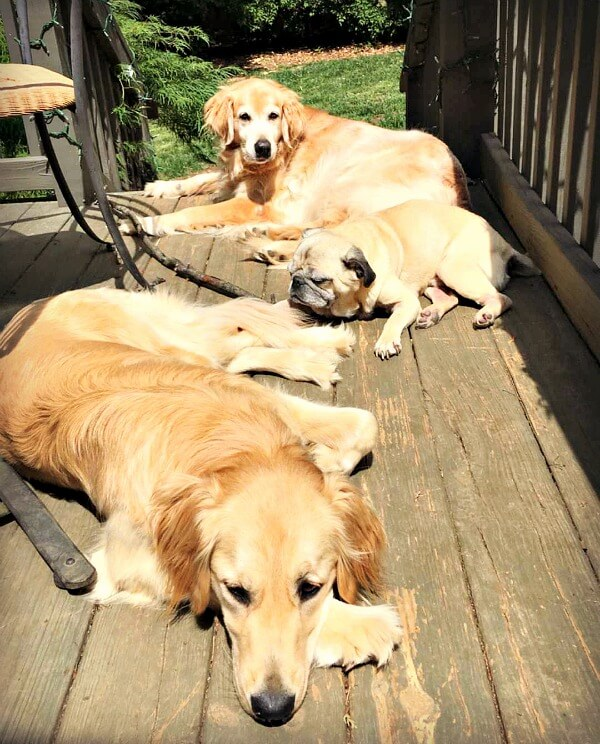 dogs sunbathing