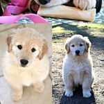 My Top 10 Tips for Raising a Puppy