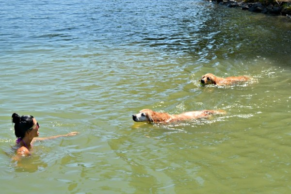 lake wylie dogs swim