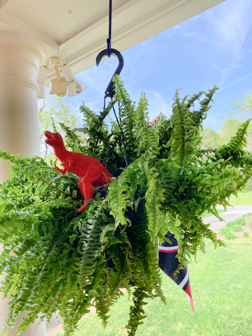 keeping birds out of ferns