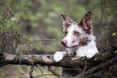Honden Diversen