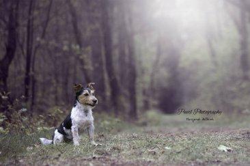 honden011