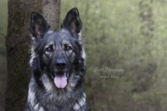 honden017