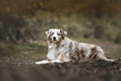 honden018