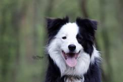 honden2007