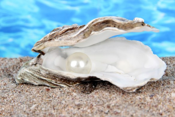 cultured white pearl in an oyster