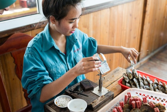 vietnamese woman inserting an irritant into an oyster to produce a pearl