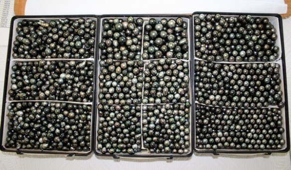 Tahitian pearls stored in boxes