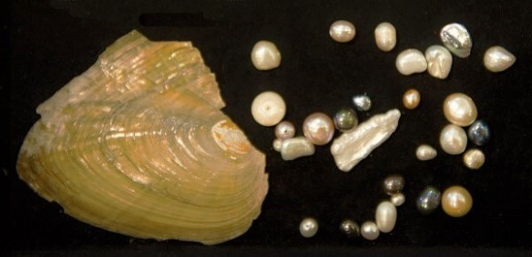 Barocke Perlentypen