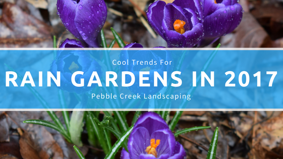 Cool Trends for Rain Gardens in 2017