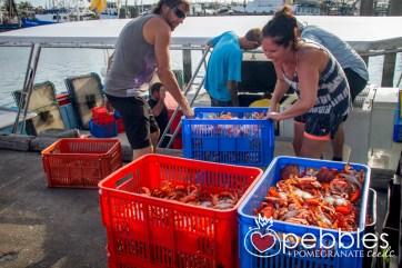 fraser-isle-spanner-crabs10