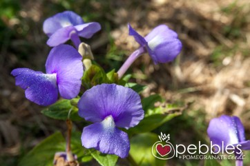 organica-floret-roses36