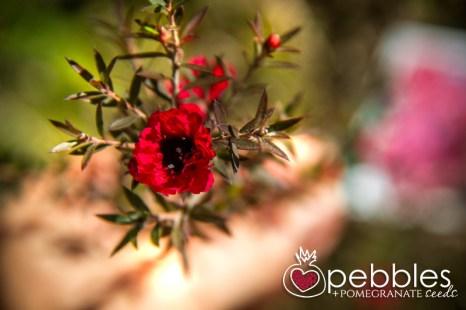 organica-floret-roses43