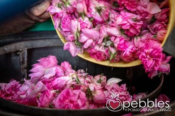 samaria-rose-farm30