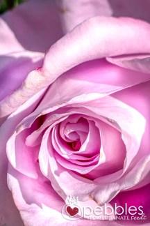 samaria-rose-farm33