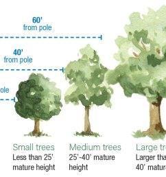 diagram showing safe distances of tree planting from utility poles [ 1137 x 780 Pixel ]