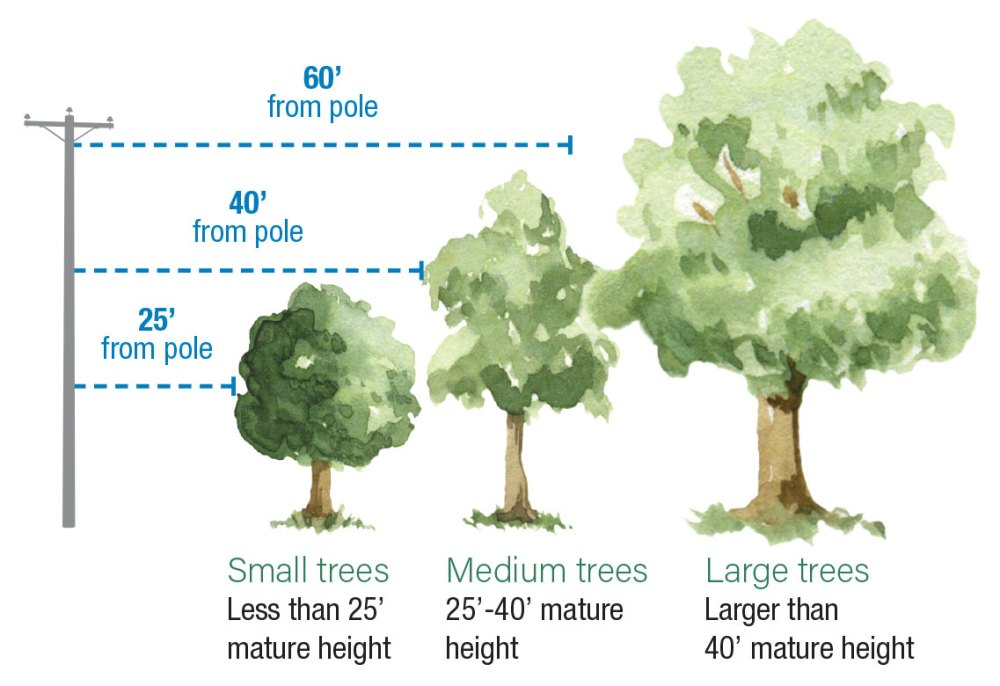 medium resolution of diagram showing safe distances of tree planting from utility poles