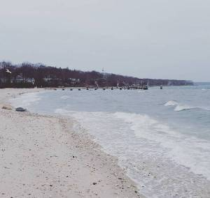 March 14, noon. Cedar Beach, Southold