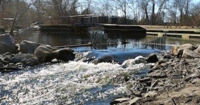 The alewife run in Grangebel Park in Riverhead