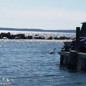 April 16, 10 a.m., North wind chop in the Robins Island lagoon