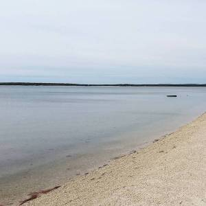 May 10, 11 a.m., Great Peconic, Laurel