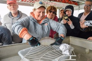 Dr. Ellen Pikitch demonstrating how acoustic tags are placed on Summer Flounder. | ShiRP photo