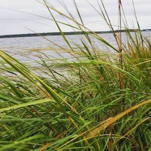 Sept. 19, 5:40 p.m., Reeves Bay, Flanders