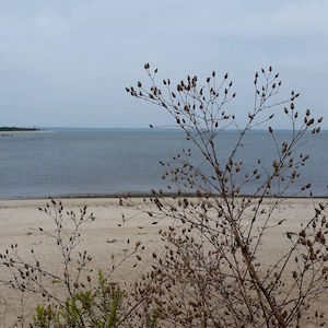 Sept. 14, Accabonac Harbor Inlet from Louse Point, Springs. 12:05 p.m.