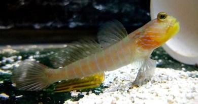 Southampton Students First In World To Raise Shrimp Gobies