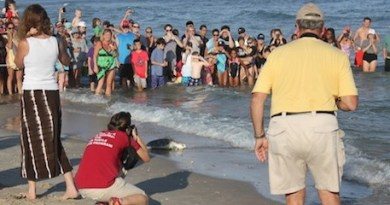Marine mammal rehabilitators from the Riverhead Foundation releasing a sea turtle back to the ocean at Ponquogue Beach in Hampton Bays in 2013.