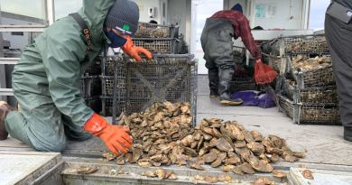 Stony Brook researchers set oysters on the man-made reefs in Shinnecock Bay | ShiRP photo