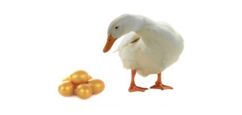 Apple: The goose that lays the golden eggs | Philip Elmer ... Golden Goose Eggs