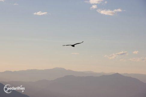 El Condor Pasa! E como passa, é só cuidar os horários que ele sobrevoa o vale entre Cordillera Negra e Blanca. Próximo das 8h da manhã todos os dias, e próximo das 17h pelas tardes.