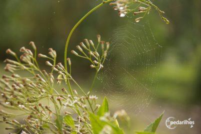 Detalhes da selva, insetos, há quanto tempo!