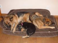 Mattress Style Dog Beds - Page 1