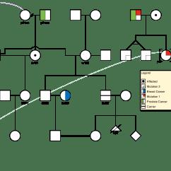 Simple Pedigree Diagram Strat Wiring Hss Genial Draw Drawing Software Genetic