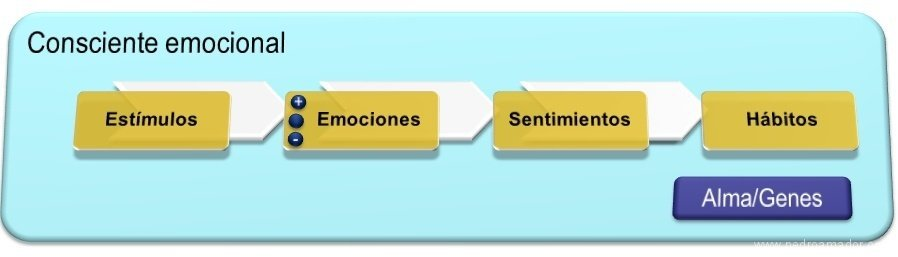Consciente emocional