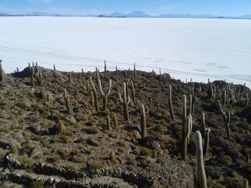 BOLIVIA-Salar de Uyuni- Incahuasi
