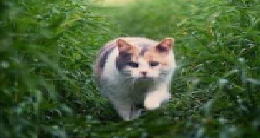 貓咪的「超能力」你知道多少? - JUSTYOU