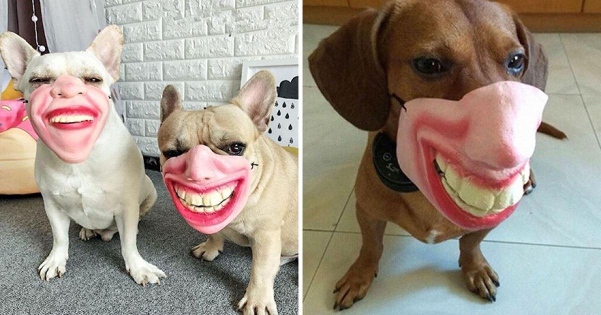 狗狗專屬「創意嘴套」可模仿人類表情 主人邊笑邊拍特寫:很鬧欸~ - JUSTYOU