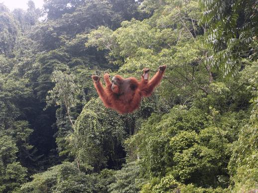 Tempattempat keren hunting foto satwa liar di Indonesia