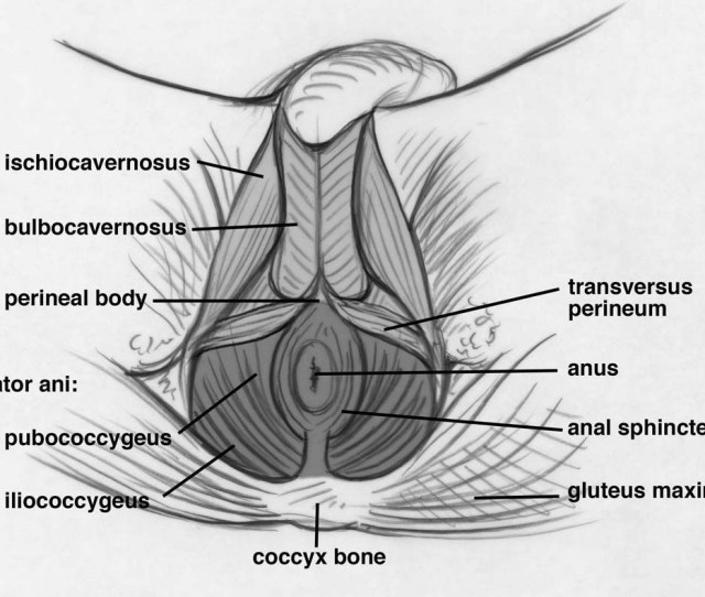 Pelvic Floor Muscles Illustration Kegels