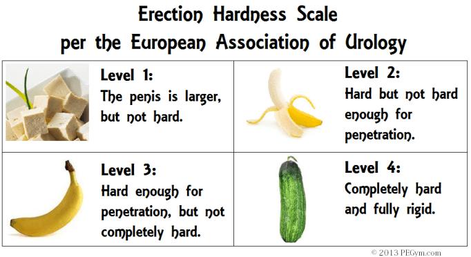 erection hardness scale